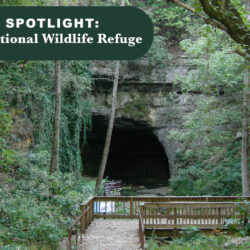 Local Spotlight: Sauta Cave National Wildlife Refuge