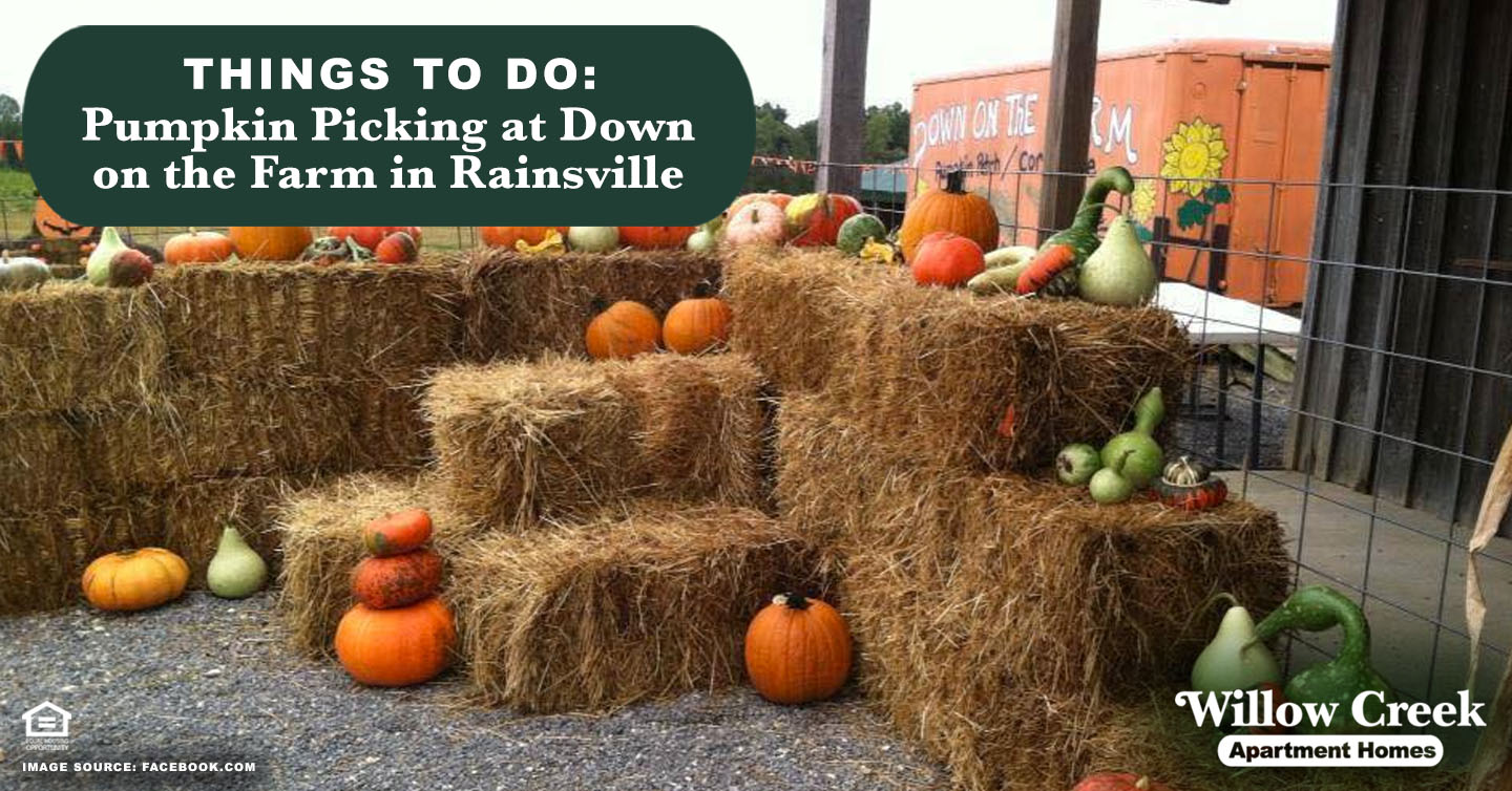 Pumpkin Picking at Down on the Farm in Rainsville